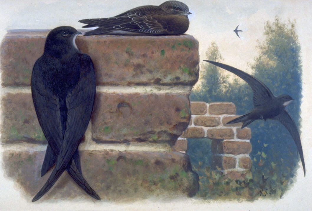 Koekkoek, M.A. (1873-1944), Naturalis Biodiversity Center, License CC0 Public Domain